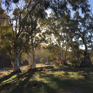 Good Morning Flinders Ranges