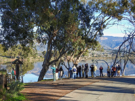 Class | Learning about Santa Barbara Winter Birds