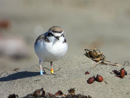 Fall Birding | Villa Creek - Estero Bluffs State Park, San Simeon, CA