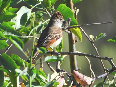 Spring Birding | Farren Road, Goleta, CA