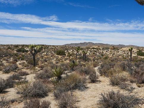 DSCN3024 Desert-.jpg