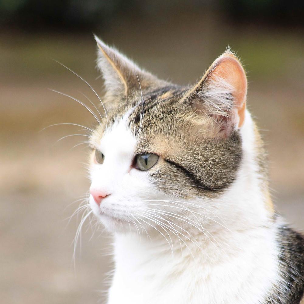 Der fokussierte Blick einer Katze