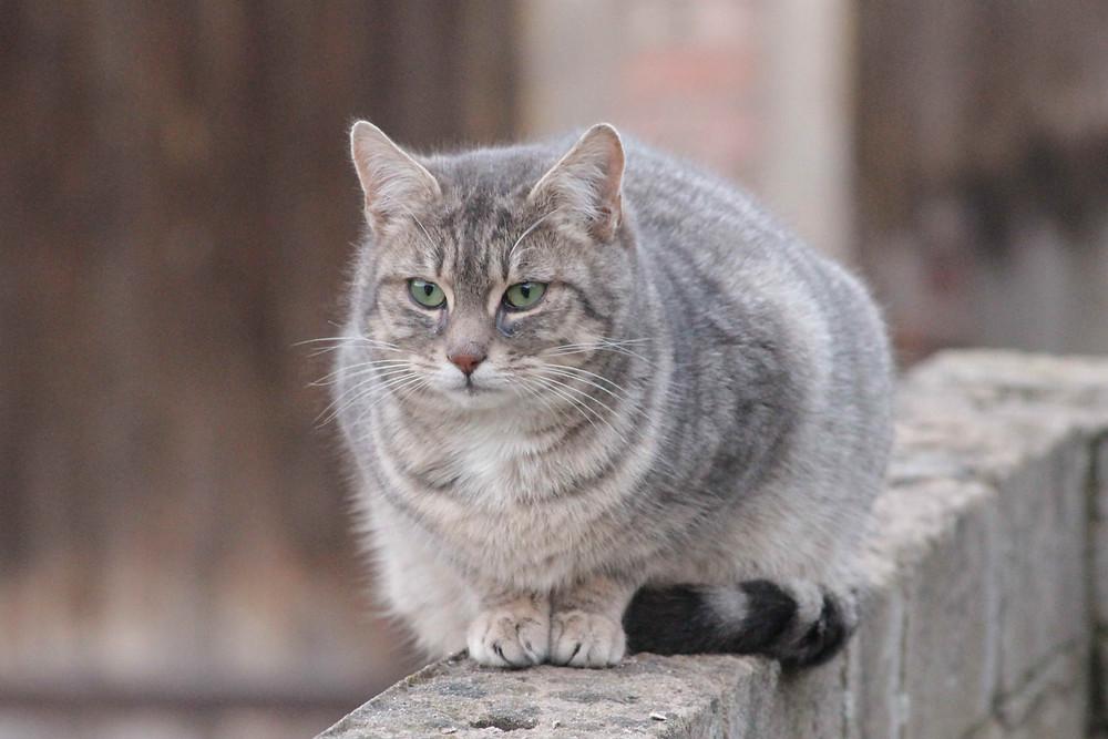 Ein Katze sitzt auf einer Mauer und guckt traurig