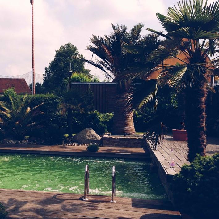 Swimming-Pool mit Palmen