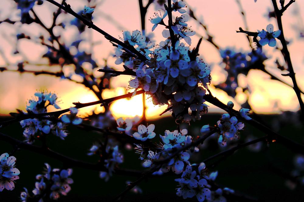 Blümchen bei untergehender Sonne