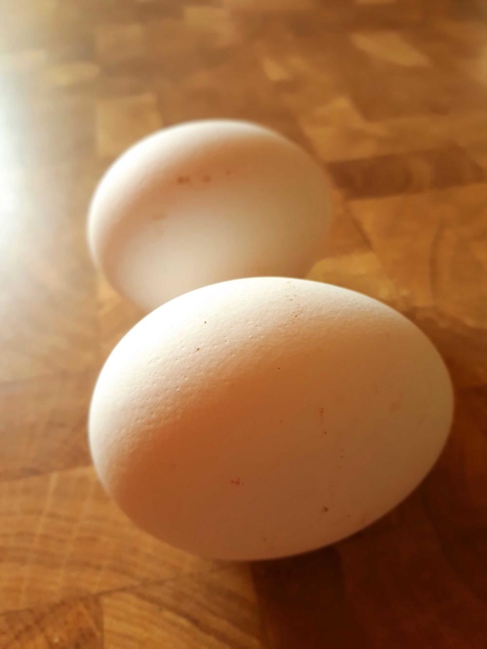 Bild 1: Die rohen Eier