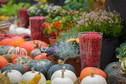 Фестиваль 'Краски осени 2017'
