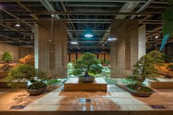 Выставка 'Искусство бонсай' 2017