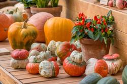 Фестиваль 'Краски осени 2016'