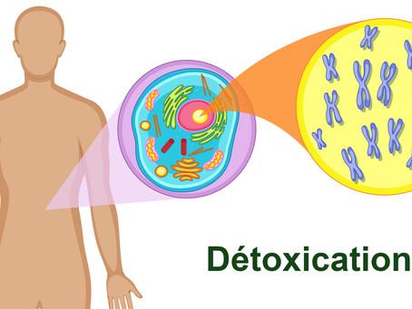 Encrassement cellulaire et apparition des maladies