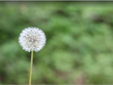 Les allergies et intolérances, quelle différence ?
