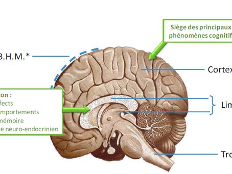 Stress et alimentation, la voie des neurotransmetteurs