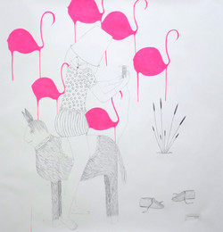 Can the flamants roses stay pink ?