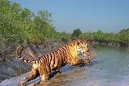 Sundarban7.jpg