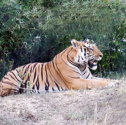 bangalore-bannerghatta-biological-park-1