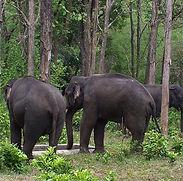 Kasu-Brahmananda-Reddy-National-Park-Sou