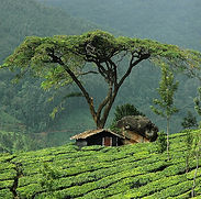 Marayoor-Sandalwoodt-Munnar-1.jpg