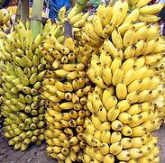 Banana_bunch_India_Tamil_word_15.jpg