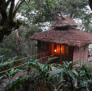 periyar-tour-treehouse-83.jpeg