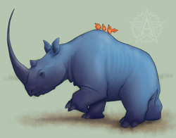 Rhino Riders