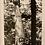 Thumbnail: Beholding Paradise: The Photographs of Thomas Merton