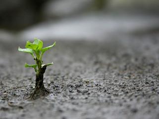Reconhecimento: Transforme tudo, o que é pequeno um dia será grande.
