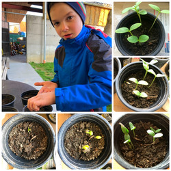 Florian-Gurkenpflanzen-wachsen.JPG