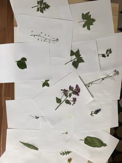 Herbarium_2B_4.JPG