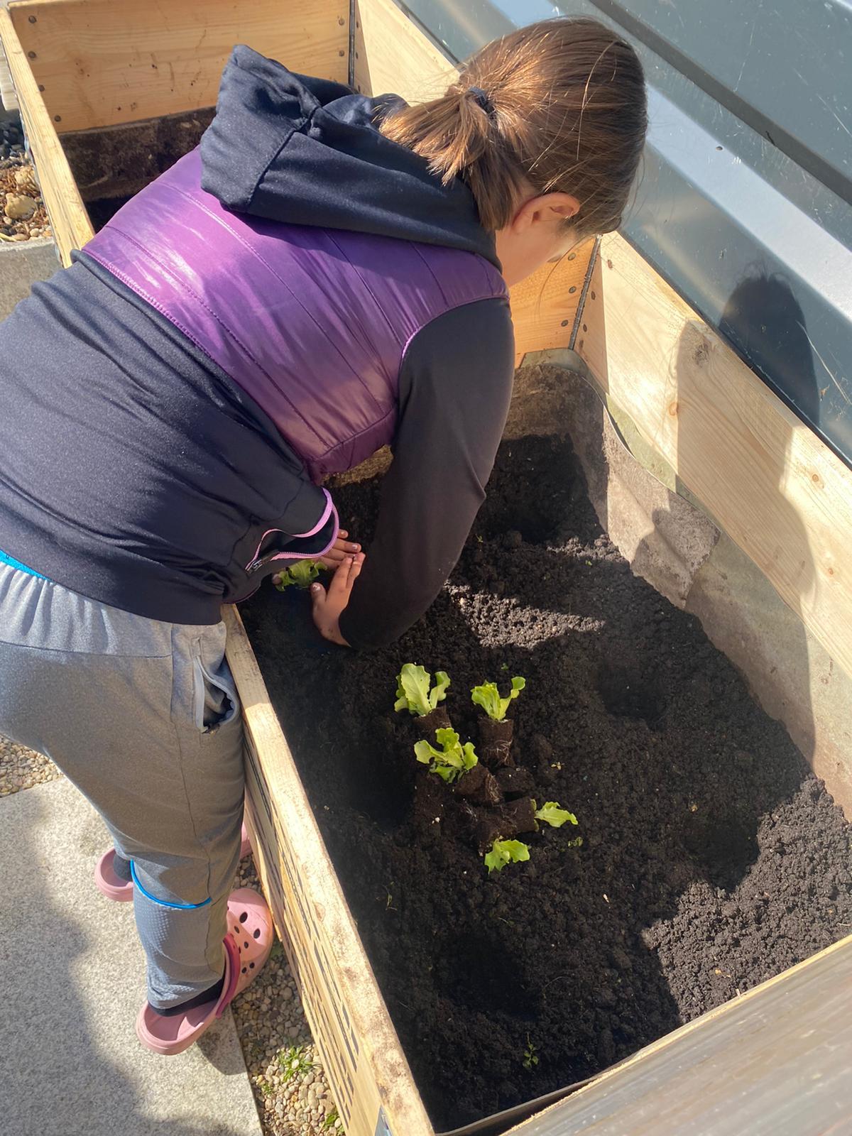 Lajla-Salatpflanzerl.jpeg
