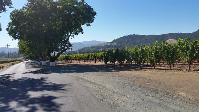 Scenic view in Napa Valley