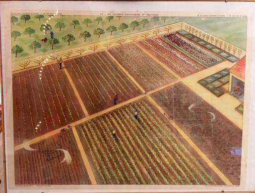 1953- 53  LES CULTURES MARAICHERES ET FR