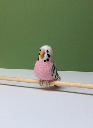Priscilla the Pink Budgie