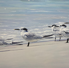 "The Tern Squad | Acrylic | 24"" x 48"""