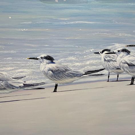 "The Tern Squad | Acrylic | 24"" x 48"""