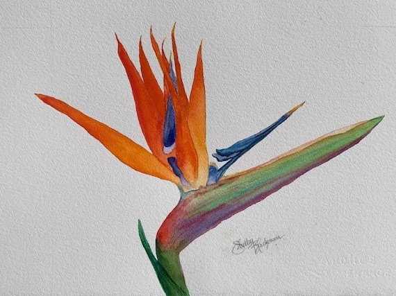 """Bird of Paradise   Watercolor   19.5"""" X 15.5""""   Framed"""