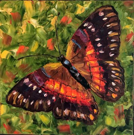 """Spring Butterfly   Oil   24"""" x 24""""   Framed"""