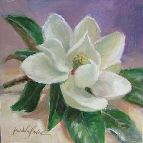 Magnolia | Oil | 6 x 6