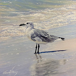 """Seagull In Surf   Acrylic   10"""" x 10"""""""