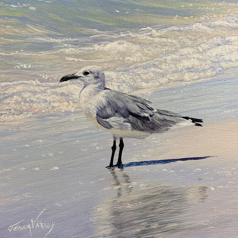 """Seagull In Surf 
