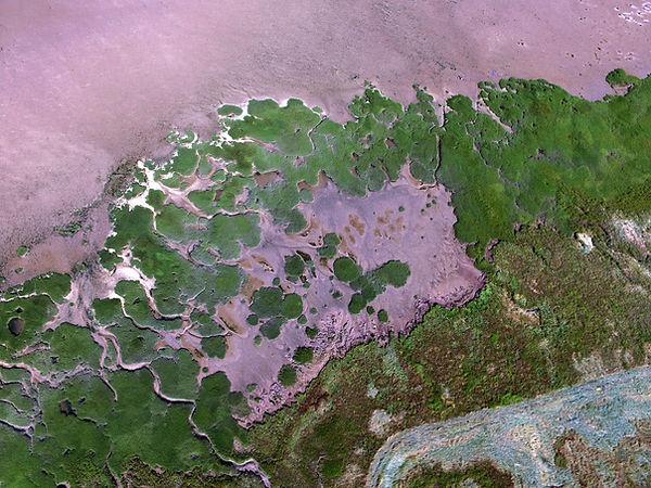 NIOZ_Spartina patches Hellegat marsh - J