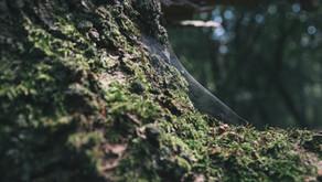 O Licenciamento ambiental nos estados e no DF