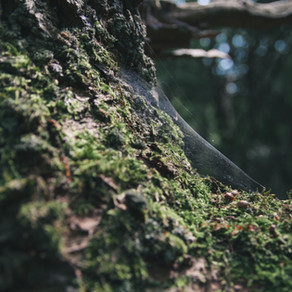 מה אתם יותר - עכבישים או עצים?