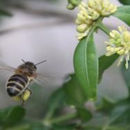 Honeybee worker & Box