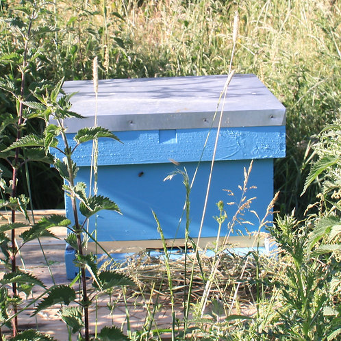 Adopt a Hive, Elder