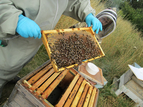 THE BEEKEEPING EXPERIENCE