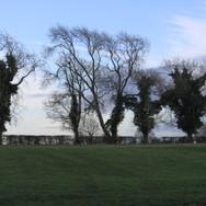Caulcott trees