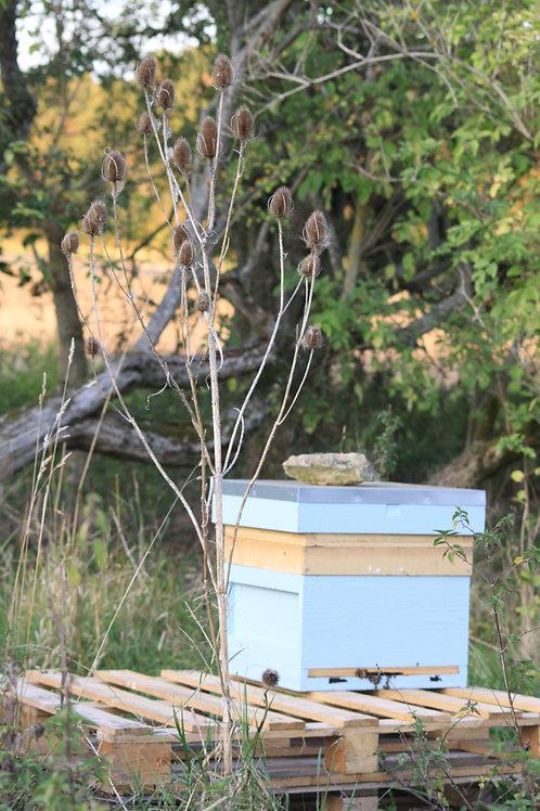 Adopt a Hive, Teasel