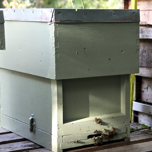 Joss's hive for adoption.
