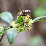 Honey bee worker on box.