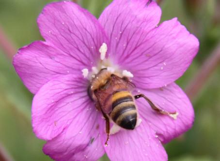 Very little flowering